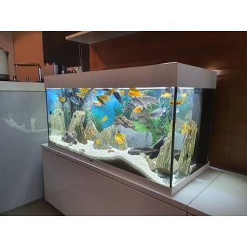 Akwarium Juwel rio 180 z pyszczakami i dodatkami