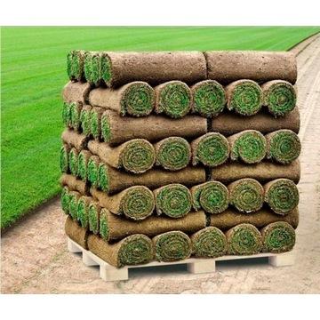 Trawa z rolki/trawnik rolowany PRODUCENT
