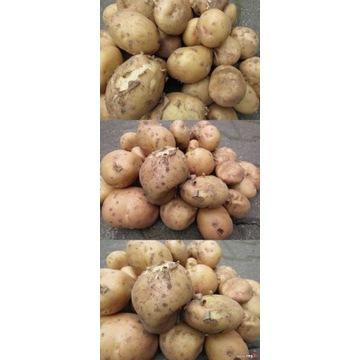 Ziemniaki młode 15 kg Irga najlepsze obiadowe