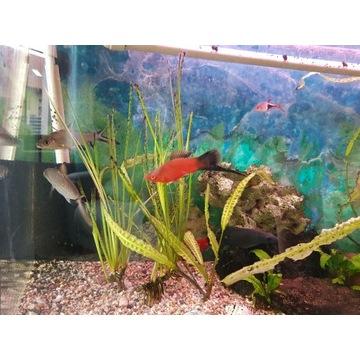 Akwarium panoramiczne 112l z szafką rybami i osprz