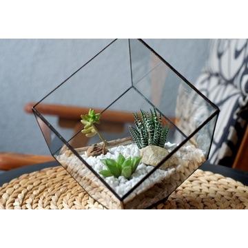 Cube -Doniczka - terrarium - dla roślin i dekoru.