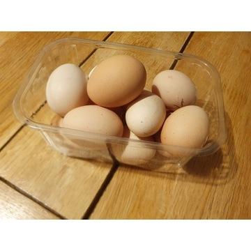 jaja kurze z przydomowego wybiegu