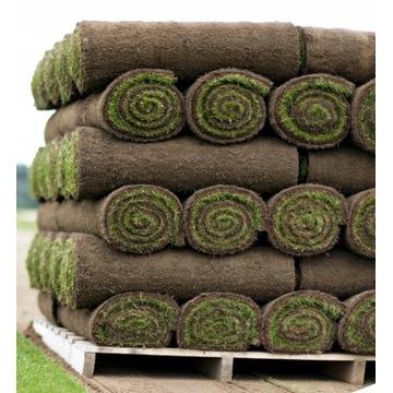 Trawa z rolki trawnik w rolkach trawniki rolowane