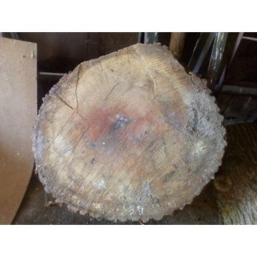 Plaster Dębowy 60cm / 10 cm