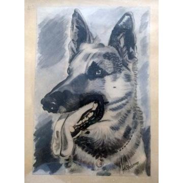 Owczarek niemiecki sygnowany portret w ramce