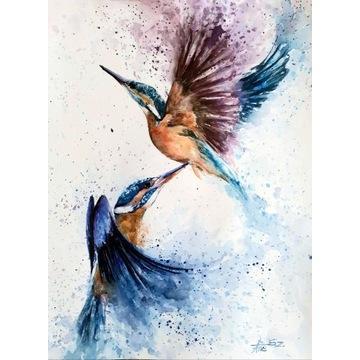 ptaki akwarele zimorodki