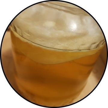 KOMBUCHA ~6 cm, starter + ulotki, grzyb herbaciany