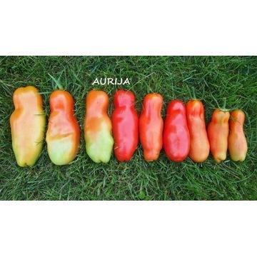 Pomidor AURIJA, Fiutek, nasiona