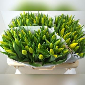 Tulipany Tulipan 8 marca Dzień Kobiet