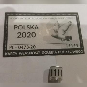 Obraczki dla gołebi PZHGP FCI 2020 z kartami