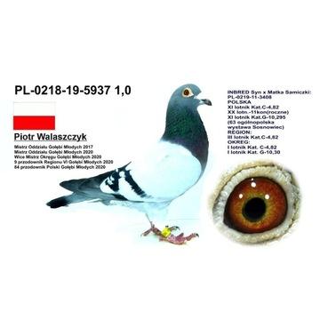 PL-0218-19-5937 (Inbred)
