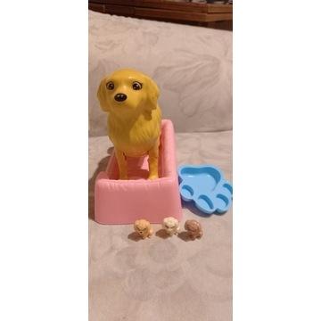 Rodzący pies pieski szczeniaczki