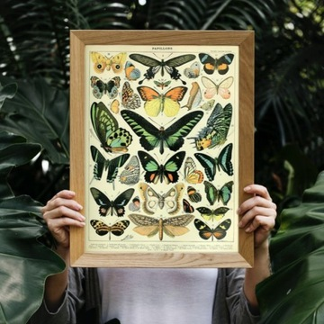 Plakat vintage kolekcja motyli