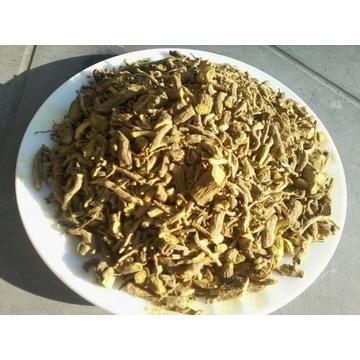 tarczyca bajkalska 100 g Polska bajkalina sucha