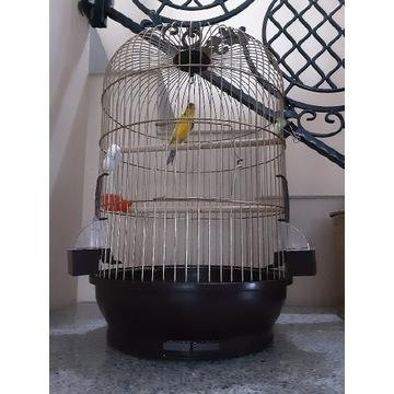 Złota klatka dla kanarka