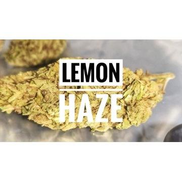 Cytrusowy Lemon Haze CBD 15% susz konopny 1g