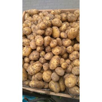 Ziemniak lord 1kg od rolnika