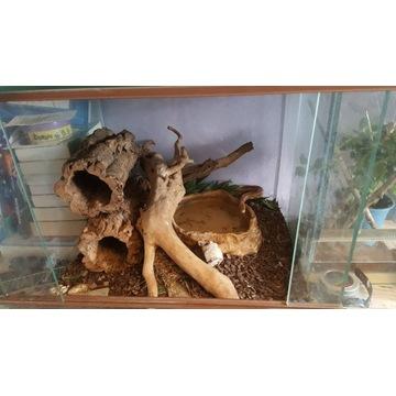 Wąż Zbożowy - Ceglany
