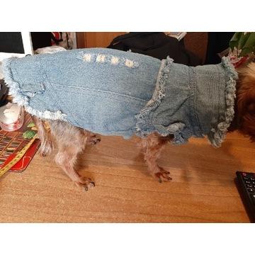 Ubranko dla yorka ,jeans