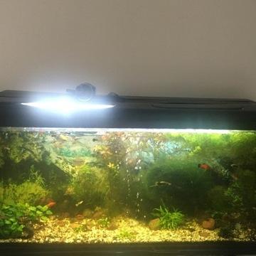 Akwarium z zawartością