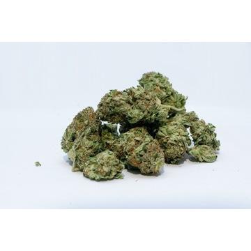 Susz konopny CBD 16,5% Mimosa Skunk