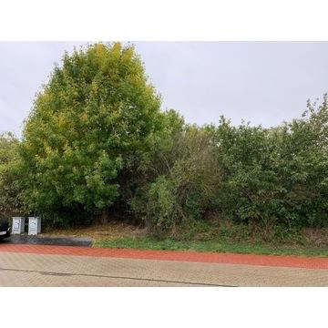 Korzenie drzew liściastych