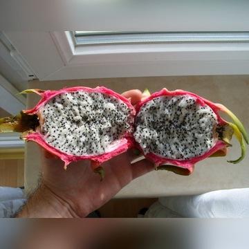Sadzonki Pitaja PITAHAYA Smoczy Owoc Kaktus
