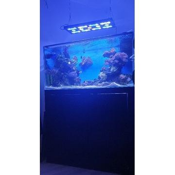 Akwarium morskie caly zestaw