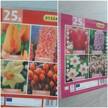 Cebulki kwiatów w zestawie hiacynt tulipan  narcyz