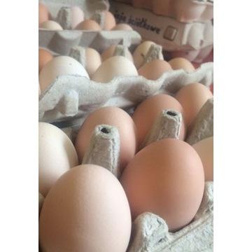 Wiejskie jajka od kur które chodzą gdzie chcą