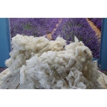 Wełna owcza surowa, runo owcze 5 kg