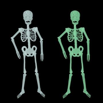 Szkielet Kostek Zabawki Świecące Fluorescencyjne