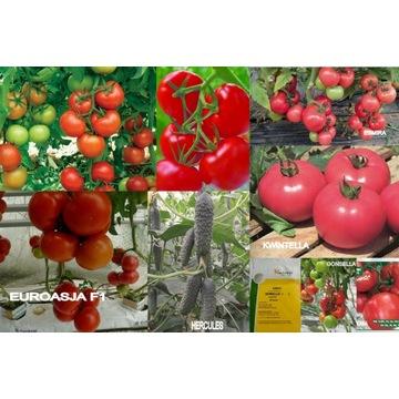 Pomidor nasiona holenderskie do wyboru + 5% gratis