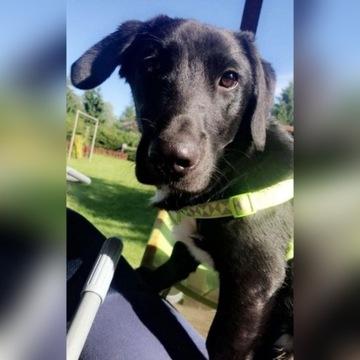 Pies Adopcja Trójmiasto