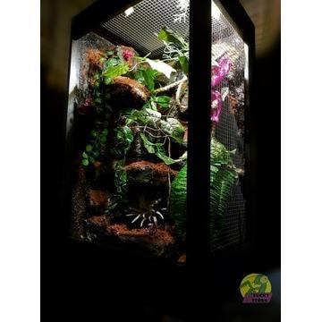 Nowe terrarium dla kameleona od LuckyTerra.