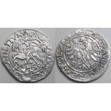 półgrosz 1566, Tykocin  -bardzo ładny-