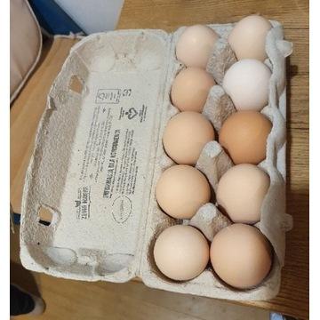 Jaja od szczęśliwych kur