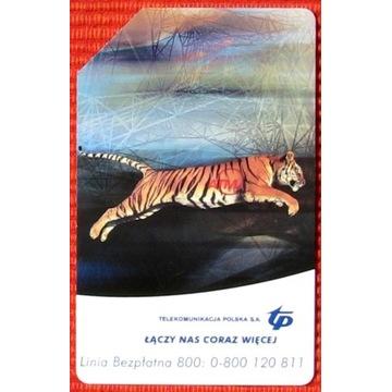 KT 947 - Linia bezpłatna tygrys