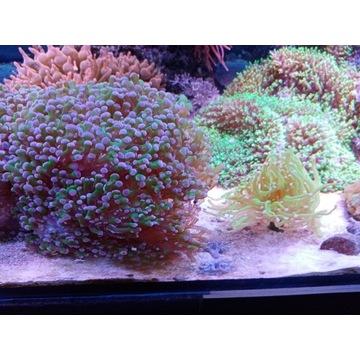 Akwarium morskie wraz z życiem  i całym sprzetem