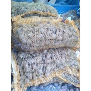 Ziemniaki sadzeniaki Vineta 1zł/kg