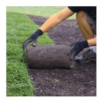 Trawa z rolki, trawa w rolkach   naturalna