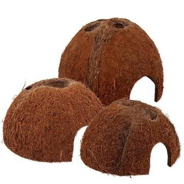 Kokos ozdobny do terrarium lub akwarium roz: S M L