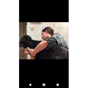 Groomer / Psi fryzjer