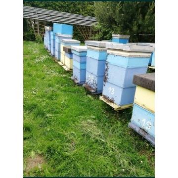 Odkłady pszczele 4 ramkowe