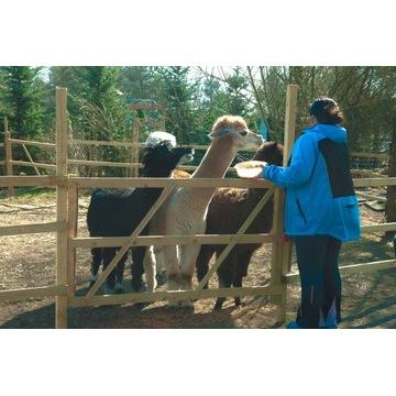 Bilet wstępu do parku Alpakija