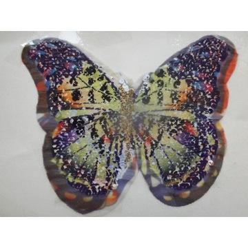 apliakcja motyl