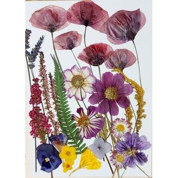 Suszone kwiaty do żywicy i pod witraże 21x30 mak 6
