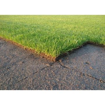 Trawa z rolki, trawa w rolkach, trawniki rolowane