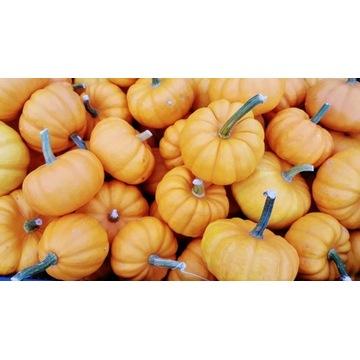 Dynia dynie Mandarin mała Pomarańczowa Wysyłka!!!