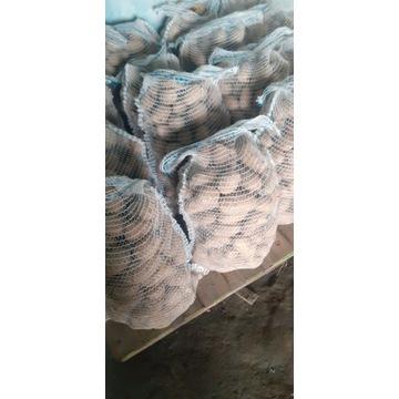 Ziemniaki odmiana catania